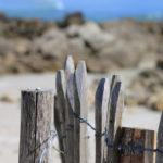 Détail d'une barrière en bois, avec une coquille d'escargot de mer.