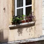 Plantes sur le bord d'une fenêtre