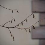 Macro. Coin d'un mur avec pierres. Branche au premier plan.