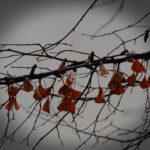 Branche avec petites feuilles triangulaires oranges.